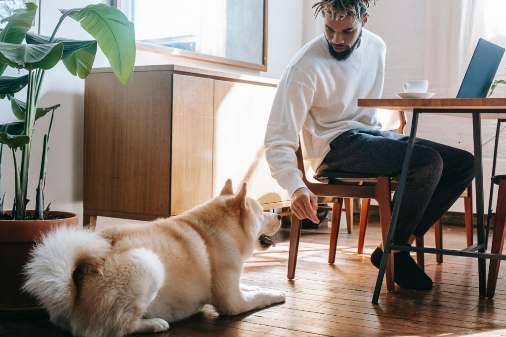 most time wasting activity at work: entertaining family and pets